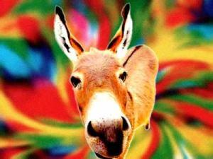 cor-de-burro-quando-foge-brasil-escola