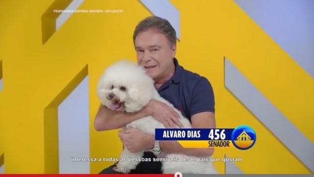alvaro.poodle
