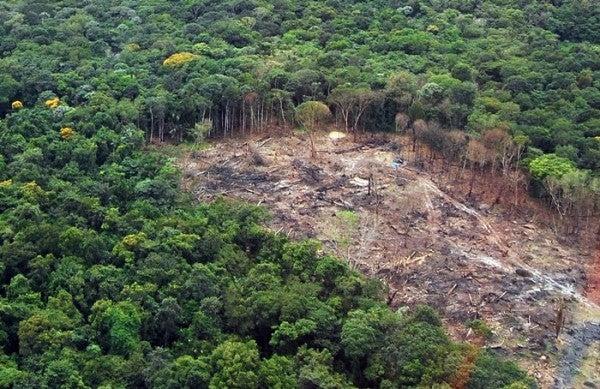 desmatamento-600x389